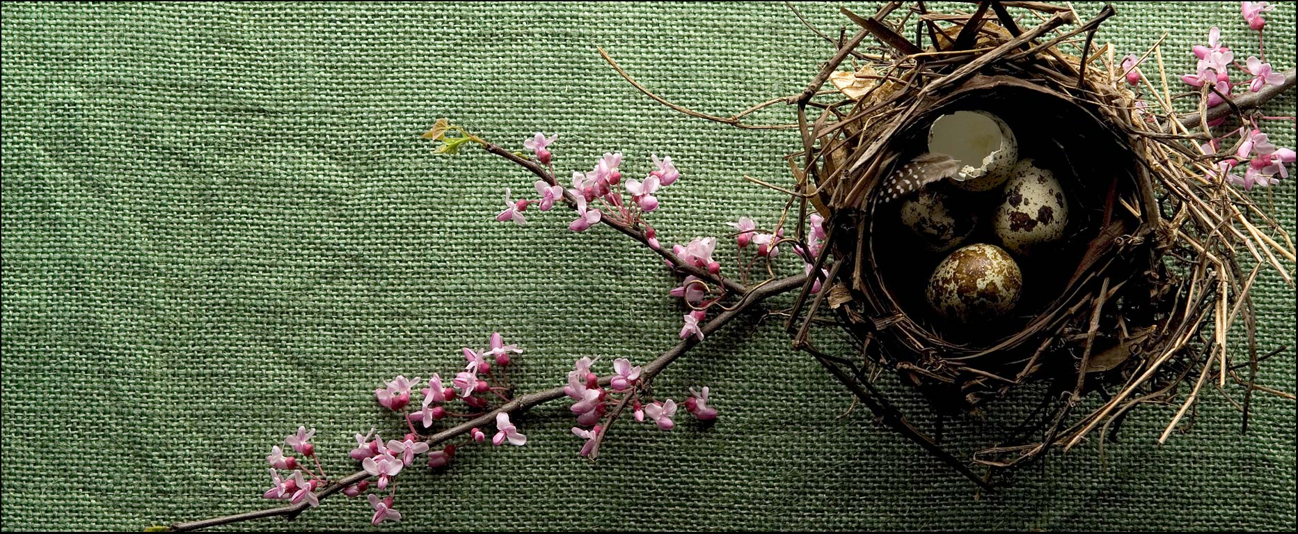 Birds nest with flowers and bird eggs on a textured green burlap background